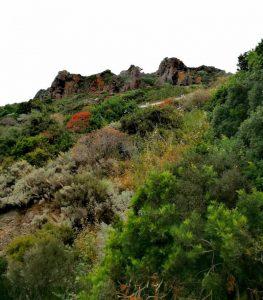 Vacanze naturalistiche ad Alghero: un'oasi ricca e profumata!